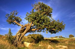 The Carob Tree:A Radical Evolutionary  Systemic Solution to the Pension Crisis