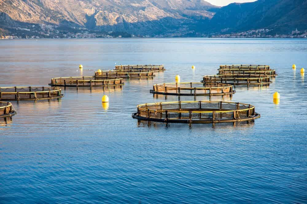 Development of Sustainable Mariculture in Israel